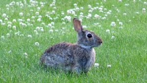 Where Can You Find Bunnies for Sale?