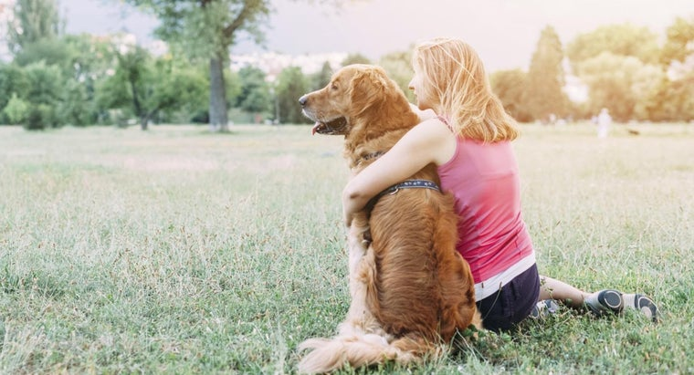 "What Are Words to the ""Rainbow Bridge"" Poem for Grieving Pet Owners?"