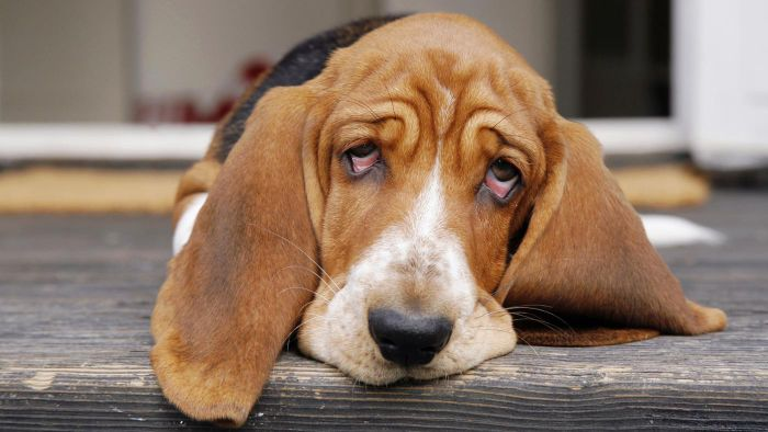 What Are Some Pet Constipation Remedies?