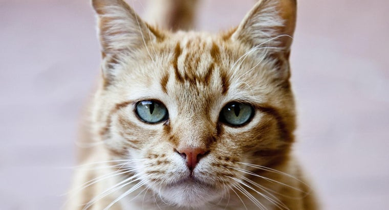 What Are Some Popular Male Cat Names?