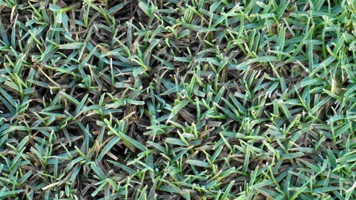 What is the best fertilizer for bermuda grass?