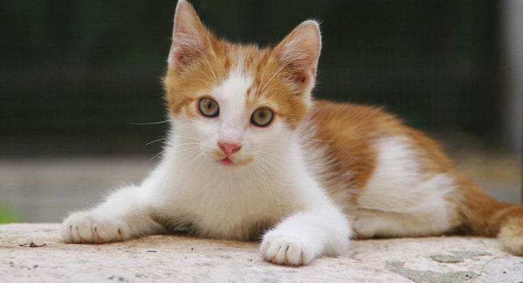 What Are Some Interesting Facts About Kittens and Cats?