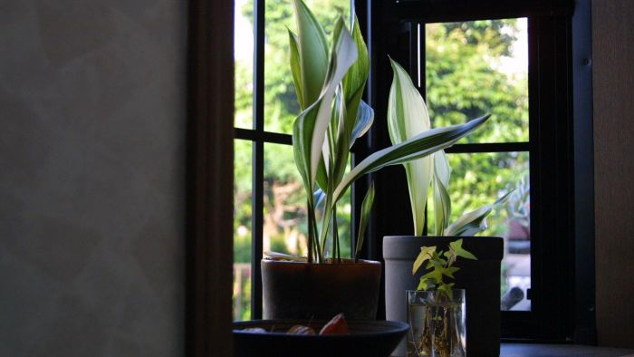 What Are Some of the Best Plants to Grow Indoors?