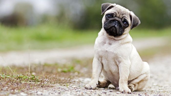 How Do You Treat Mange in Dogs?