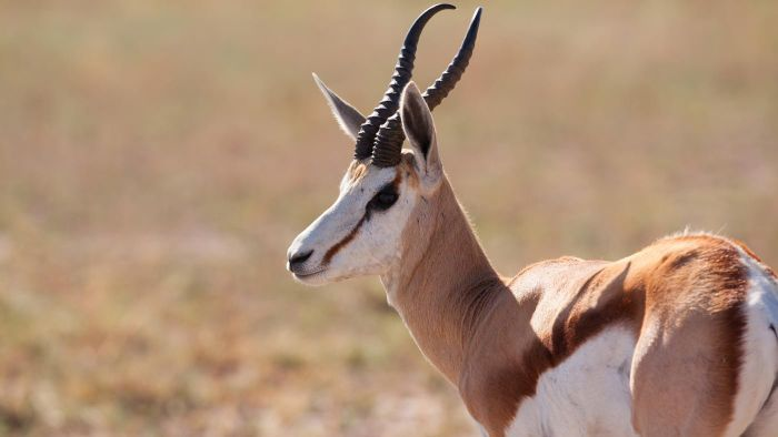 What Are Some Endangered Desert Animals?