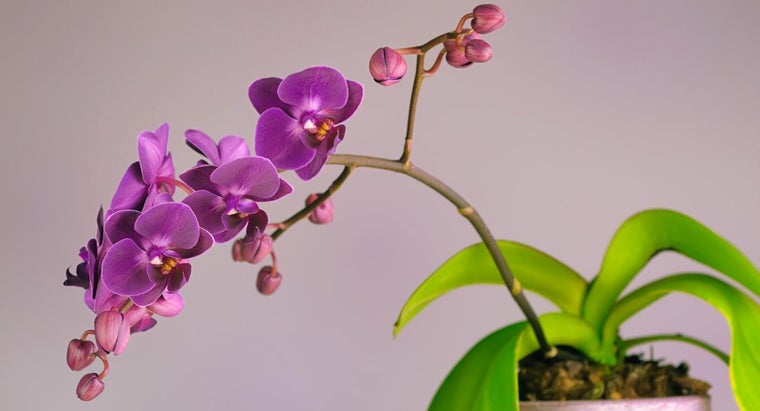 What Are Some Tips for Orchid Care?