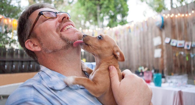 How Do You Search for Adoption Dogs?