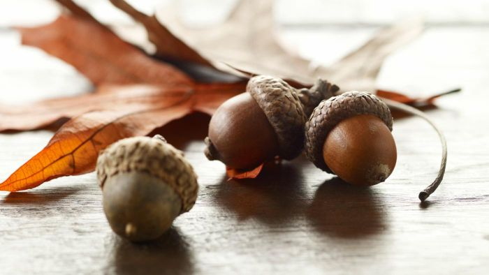 What Are the Different Types of Acorns?