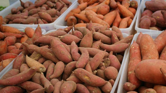 What Are the Differences Between Yams and Sweet Potatoes?