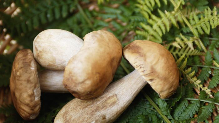 How can I recognize edible mushrooms?