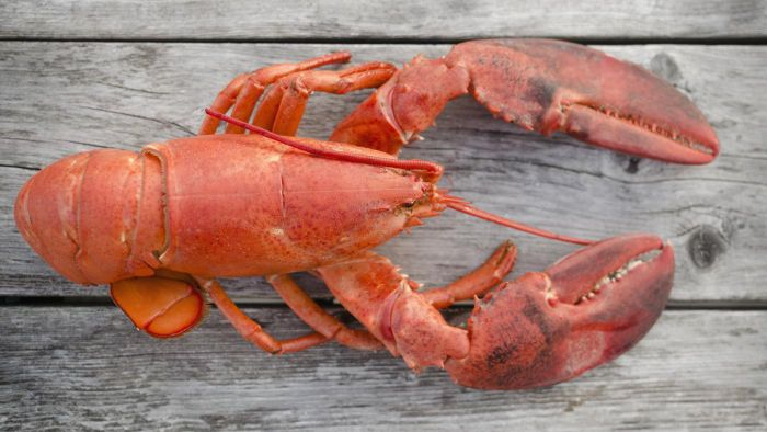 Where Can You Find a Lobster Buffet in Rhode Island?