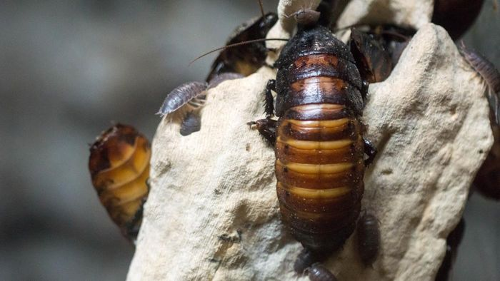 What Are Some Palmetto Bug Facts?