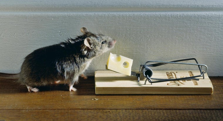 Can You Download and Print a Pest Control Practice Test Online?