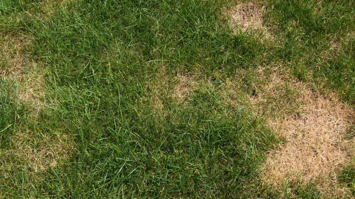 What Causes Brown Patches on Lawns?
