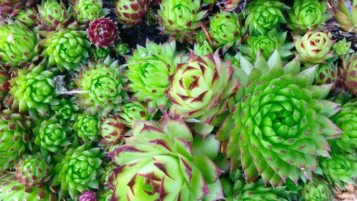 What Are Some Great Garden Plants That Are Drought Resistant?