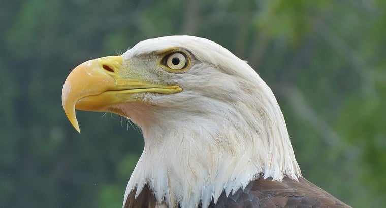 Where Can You Learn More About the American Bald Eagle?