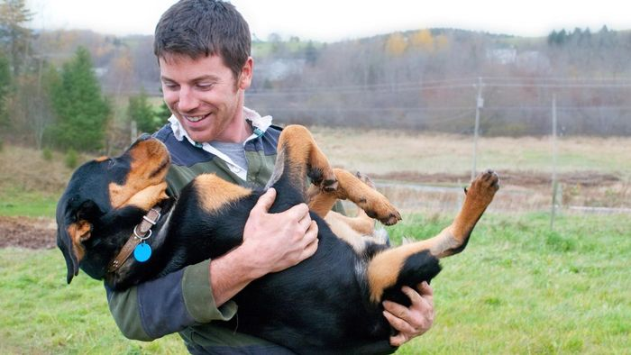 How Can You Find Rottweilers for Adoption?