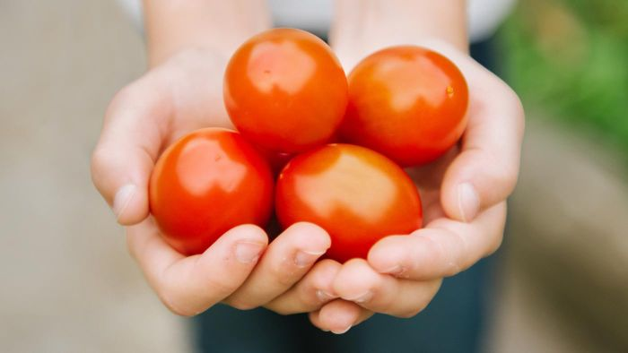 What Are Some Recipes That Use Sweet Tomatoes?