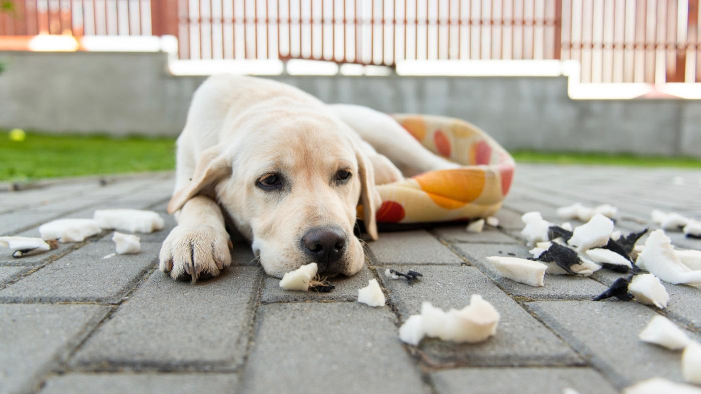What Are the Symptoms of Poisoning in Dogs?