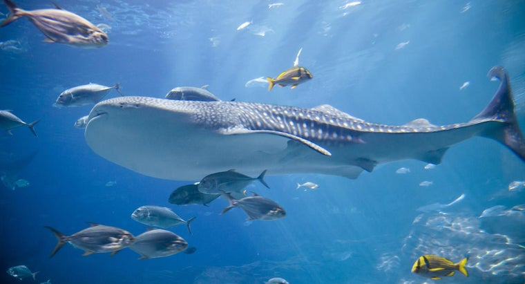 How Much Are Tickets to Ripley's Aquarium in Toronto?