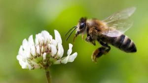 Why Is It Important That Honey Bees Are Dying?