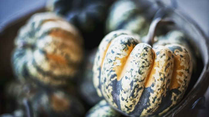 Is Acorn Squash Sold in the Summer Months?