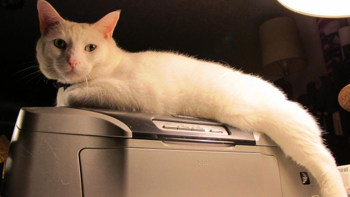 Where Can You Find Solutions to Common Epson Printing Problems?