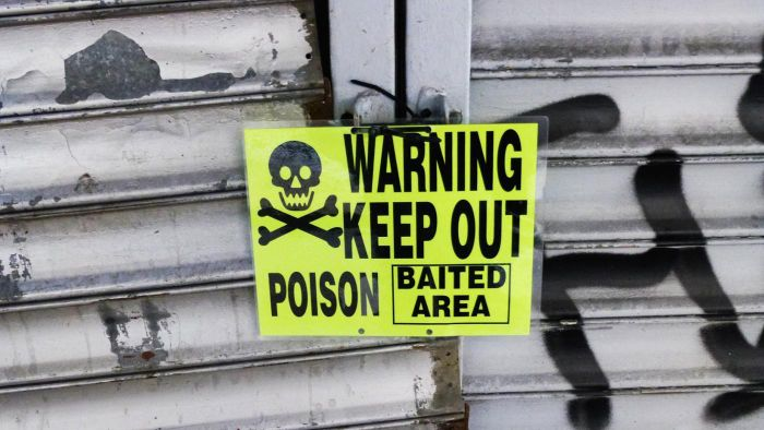 What Are the Ingredients in Rat Poison?