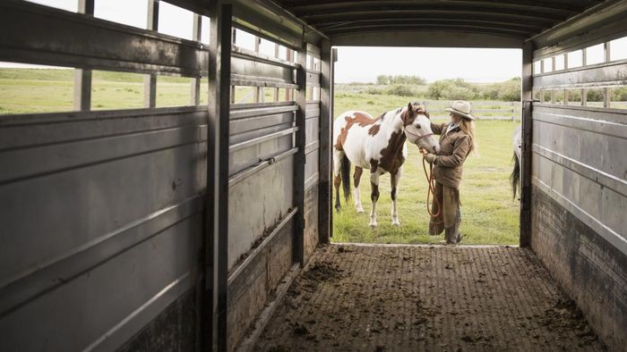 Do Companies Rent Livestock Trailers?