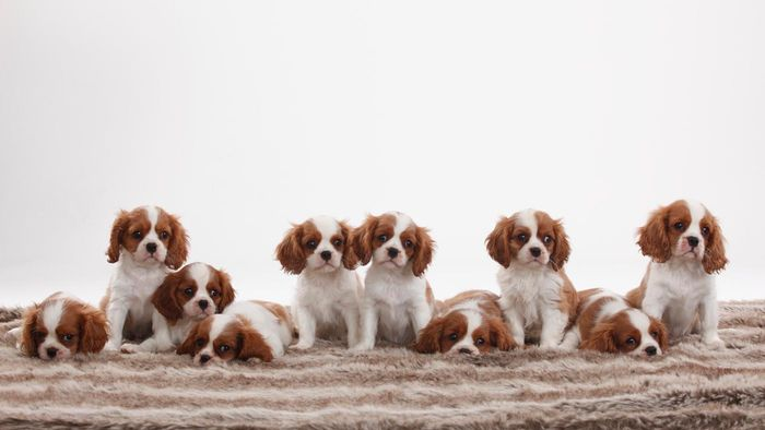 What Are Some Popular Puppy Names?