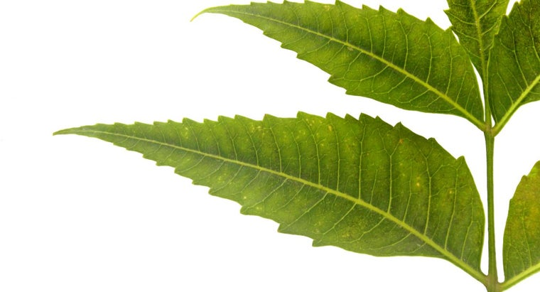 What Are Some Medical Benefits of Neem Tree Leaves?