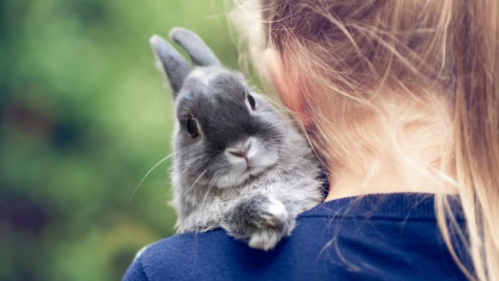 What Are Some Facts Kids Should Know About Taking Care of a Pet Rabbit?