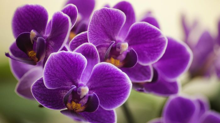 What Are Some Good Pots for Growing Orchids?