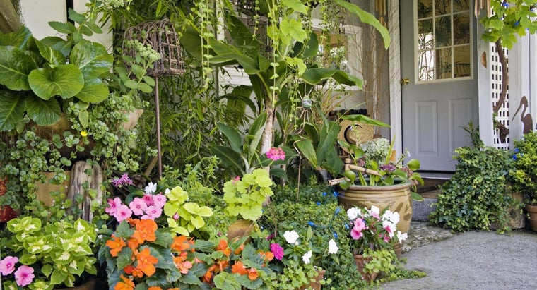 What Are Some Good Plants for Shade Gardening?