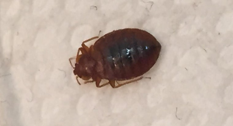What Are Ways to Kill Bedbugs?