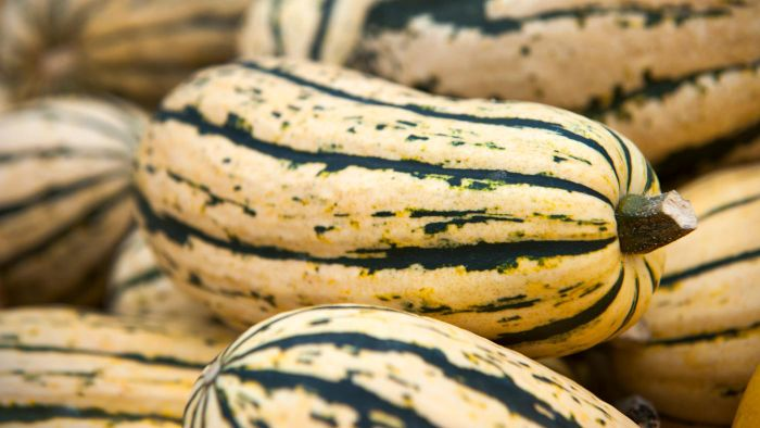 What Is a Delicata Squash?