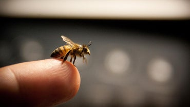 What Is an Effective Treatment to Stop Swelling From a Bee Sting?