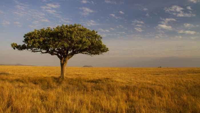 What Country Is the Savannah Located In?