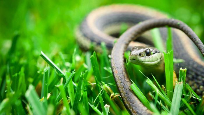 How do you identify snakes found in your backyard?
