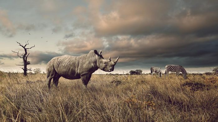 What kind of habitat does a rhinoceros need?