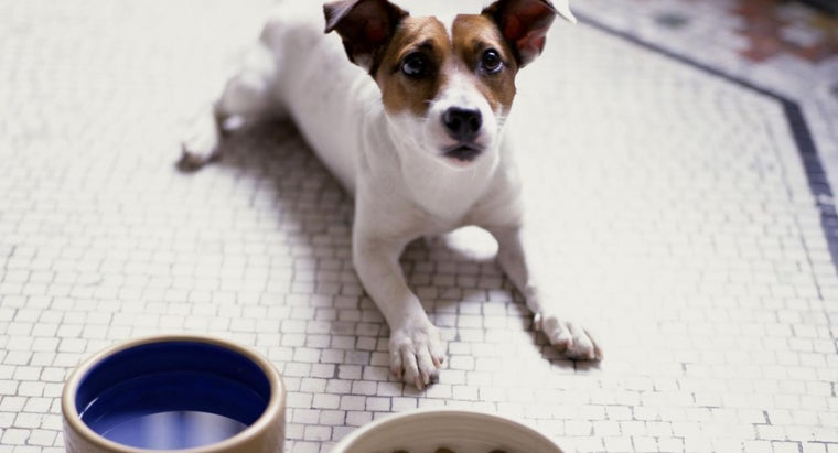 What Are Some Healthy, Natural Dog Food Brands?