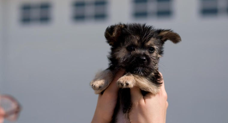 How Do You Find A Maltese Yorkie Mix Rescue Puppy To Adopt