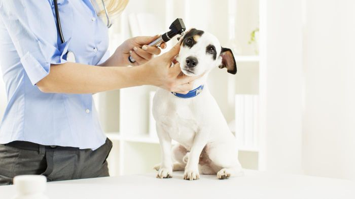 What Is the Typical Cost of a MRI for a Dog?