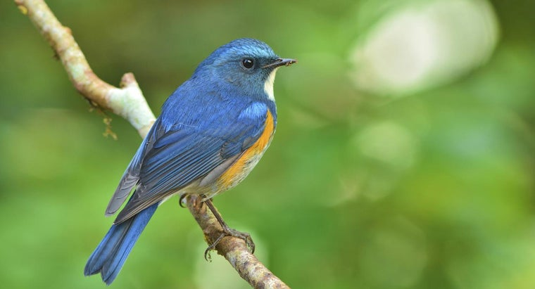 Where Can You Track Migrating Bluebirds?