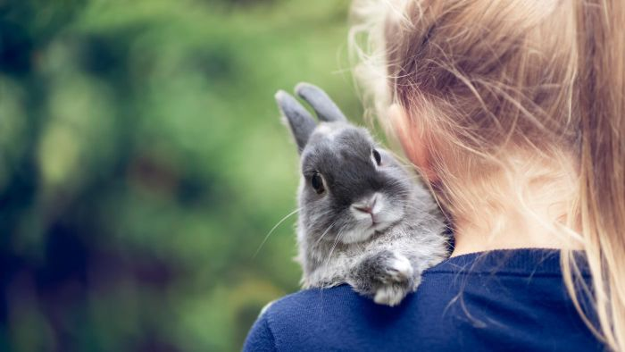 What Are Some Popular Names for Pet Bunnies?