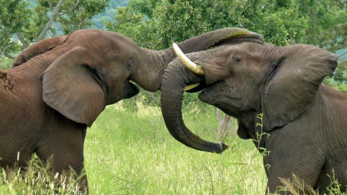 What Are Some Facts About Elephants for Kids?