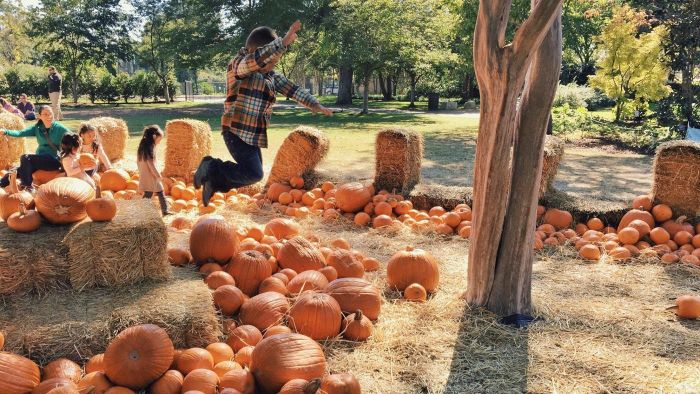 How Can You Find Pumpkin Farms in Your Local Area?