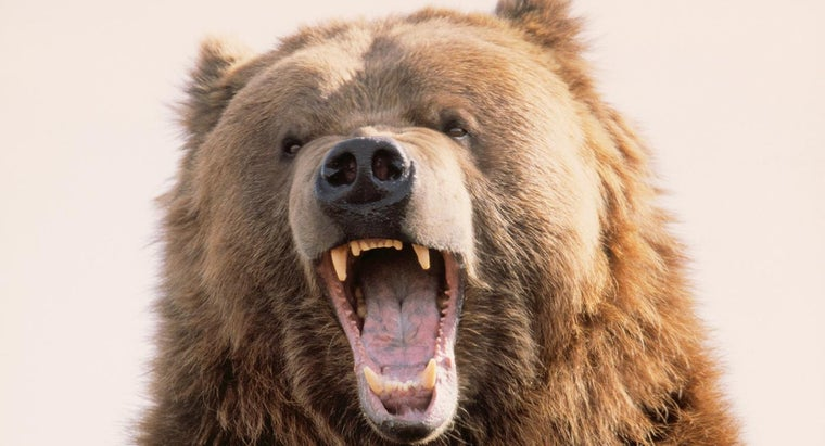 What Are Some Fun Bear Hunting Games?
