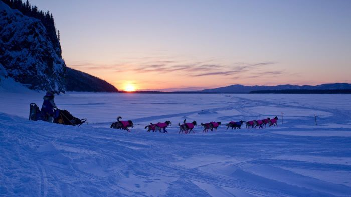 What Information Is Available on the Iditarod Home Page?