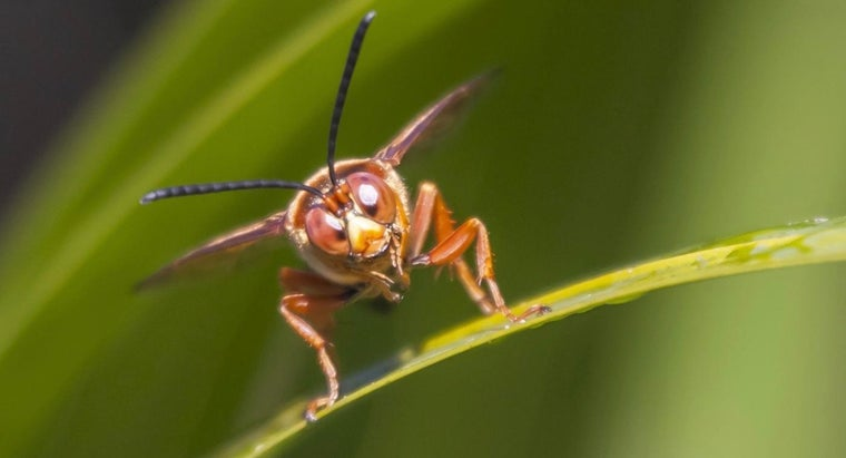 What Treatments Lower Swelling for Wasp Stings?